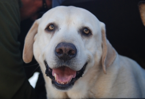 A friendly smile - It's important for your canine to meet and greet others with a polite manner and friendly smile